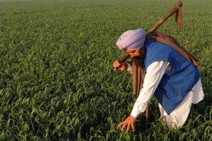 L'Inde, un géant agricole, laboratoire des multinationales de l'agrobusiness.