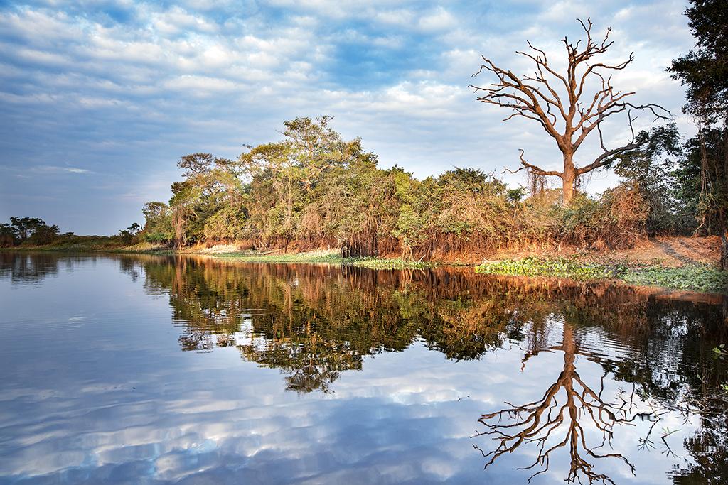 Landscape on the river side, Pantanal wetlands, Mato Grosso, Brazil. Biosphoto / Franco Banfi