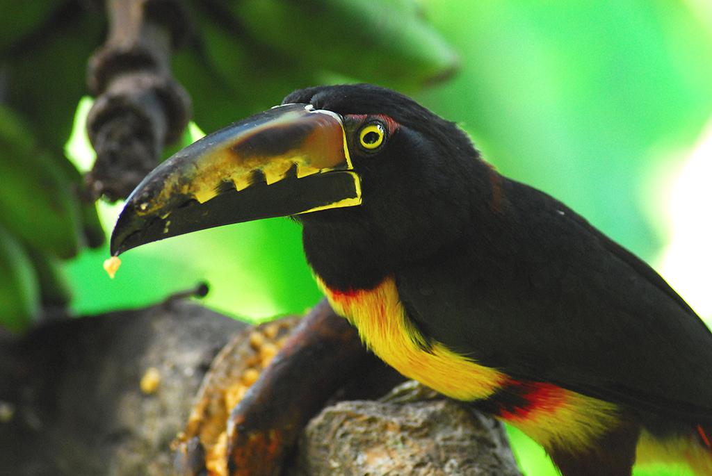 biodiversite2evrardsandra
